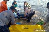 Polisi evakuasi mayat mengapung di bawah Jembatan Kuning
