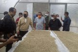 Ekspor kopi Mamasa Sulbar capai 400 ton pertahun