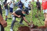 Kupang gandeng mahasiswa hijaukan kawasan kota
