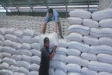 Penundaan impor beras akan mendongkrak harga gabah