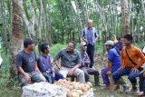 Pemkab Muba dorong  petani gunakan aplikasi daring pasarkan bokar