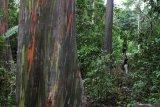 LLH Jejak Bumi Indonesia mantapkan program  1 miliar pohon