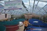 Budidaya lele dengan sistem bioflok di Palembang