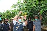 Pemprov Sumsel dorong pengembangan  wisata Pagaralam