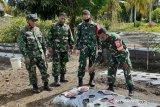 TNI Pariaman kembangkan pupuk organik wujudkan ketahanan pangan dimasa pandemi