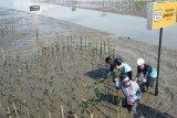 BPDASHL Jeneberang gandeng SOSBOFI hijaukan pesisir Lantebung Makassar