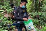 Bea Cukai gandeng TNI-AD patroli bersama di perbatasan RI-PNG