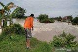 Belasan warga mengungsi akibat tanggul Sungai Gelis di Kabupaten Kudus jebol