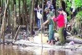BKSDA: Membuang sampah di sungai pemicu buaya  sasar permukiman