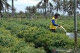 Sinergi petani dan pemerintah mengelola hasil panen pada masa pandemi