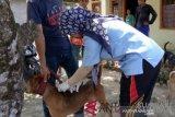 Pemkab Agam sediakan 5.000 vaksin bagi hewan pembawa rabies