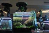 Festival Aquascape dan ikan hias