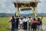 DPRD Kulon Progo minta persawahan Pronosatan menjadi kawasan agrobisnis