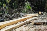 Wakil Ketua DPRD Takalar ditetapkan sebagai tersangka kasus pengrusakan hutan