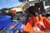 Produksi Perikanan Tangkapan Nelayan Di Padang Turun Di Masa Pandemi