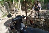 14 ekor ayam pesabung ayam di Labuhan Haji tertinggal saat dibubarkan polisi (Video)