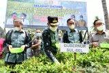 Gubernur Sulsel Nurdin Abdullah Ikut panen cabai di Kabupaten Wajo