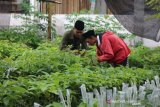 Bisnis bibit pertanian dorong dinamika ekonomi desa