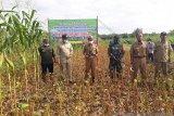 Pemkab Gunung Kidul menggalakan penanaman kedelai