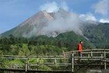 Gunung Merapi dua kali mengeluarkan guguran material sejauh 600 meter