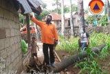 Dua rumah warga Rote Ndao rusak diterjang angin puting beliung