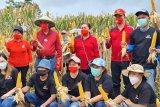 Bupati Roring dorong petani gerakkan ekonomi pertanian terintegrasi