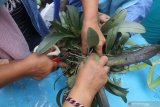 Anggota paguyuban usaha mikro kecil menengan (UMKM) 'Pengusaha Sukses Mulia' mengikuti pelatihan budidaya anggrek di Kota Kediri, Jawa Timur, Sabtu (16/1/2021). Pelatihan dengan menghadirkan petani anggrek tersebut bertujuan memberi wawasan tentang budidaya anggrek yang dapat menjadi usaha sampingan guna menambah pendapatan saat pelaku UMKM terpuruk karena pandemi COVID-19. Antara Jatim/Prasetia Fauzani/ZK