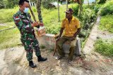 Babinsa Koramil Arso lakukan komunikasi sosial dengan ondoafi