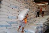 Target pengadaan pangan Bulog Banyumas capai 33.300 ton setara beras