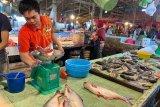 Harga ikan budidaya di Palembang naik