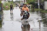 Warga menerobos genangan banjir di perumahan desa Sindang, Kecamatan Sindang, Indramayu, Jawa Barat, Kamis (21/1/2021). Buruknya drainase membuat sejumlah rumah warga di daerah itu kerap digenangi banjir ketika hujan turun. ANTARA JABAR/Dedhez Anggara/agr