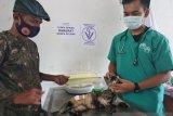 PDHI Sulselbar tangani 30 kucing terdampak gempa Sulbar