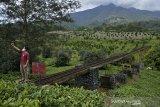 Pengunjung berswafoto di jembatan irigasi air peninggalan zaman kolonial Belanda di kawasan Perkebunan PTPN VIII Dayeuhmanggung, Cilawu, Kabupaten Garut, Jawa Barat, Jumat (22/01/2021). Jembatan irigasi air sepanjang 200 meter yang dibangun pada tahun 1913 oleh kolonial Belanda tersebut menjadi daya tarik wisatawan dengan suasana perkebunan teh dan pemandangan gunung Cikuray. ANTARA JABAR/Candra Yanuarsyah/agr