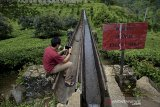 Pengunjung memotret jembatan irigasi air peninggalan zaman kolonial Belanda di kawasan Perkebunan PTPN VIII Dayeuhmanggung, Cilawu, Kabupaten Garut, Jawa Barat, Jumat (22/01/2021). Jembatan irigasi air sepanjang 200 meter yang dibangun pada tahun 1913 oleh kolonial Belanda tersebut menjadi daya tarik wisatawan dengan suasana perkebunan teh dan pemandangan gunung Cikuray. ANTARA JABAR/Candra Yanuarsyah/agr