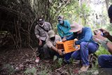 Memperingati Hari Primata Nasional yang jatuh pada 30 Januari mendatang, PT Timah Tbk bersama Animal Lovers Bangka Island (Alobi) Foundation, BKSDA, instansi pemerintah, komunitas, universitas, Pokdarwis dan masyarakat Desa Gudang melepasliarkan enam satwa liar langka endemik Bangka Belitung di salah satu Hutan Konservasi di Bangka , Kamis (21/1/2021).