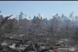Restorasi gambut dan mangrove dilanjutkan, Riau masih jadi prioritas