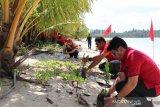 Kader PDI Perjuangan Sumbar tanam ribuan pohon