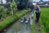 Nenek 75 tahun ditemukan meninggal di kolam ikan di Motong Gading Lombok Timur