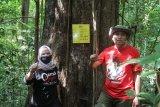 Musi Banyuasin dorong program adopsi  pohon ulin