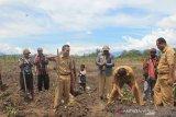 Pemkab Jayawijaya dorong petani jamin ketersediaan pangan