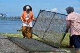 Wanita pesisir menjemur ikan asin olahan di pantai Lhokseudu, Kecamatan Leupung, Kabupaten Aceh Besar, Aceh, Selasa (26/1/2021). Perajin ikan asin di daerah pesisir itu menyatakan usaha pengolahan ikan asin di tengah pandemi COVID-19 berjalan normal dengan harga penjualan kisaran Rp100.000 perkilogram atau meningkat dibanding sebelumnya Rp80.000 perkilogram akibat persediaan bahan baku ikan segar berkurang. Antara Aceh.Ampelsa.