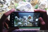 Ari Subekti memotret aquascape karyanya untuk selanjutnya diunggah melalui pasar digital di Ngawi, Jawa Timur, Selasa (26/1/2021). Perajin aquascape setempat  berupaya meningkatkan penjualan dengan menggenjot pemasaran di pasar digital serta memberikan layanan pengiriman melalui akses jalan tol untuk mengurangi resiko kerusakan barang. Antara Jatim/Ari Bowo Sucipto/zk.