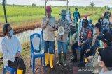 Pemprov berharap program ketahanan pangan BRGM diperluas di Kalteng