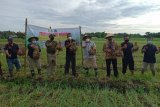 BI dorong produktivitas pertanian dengan program pendampingan