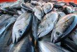 Produk tuna Indonesia raih sertifikasi standar global