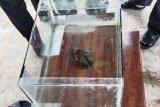 Peneliti Itera pastikan batu jatuh di Desa Astomulyo Lampung Tengah meteor
