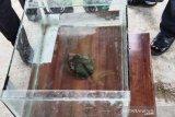 Peneliti sebutkan  batu yang jatuh di Lampung adalah meteor