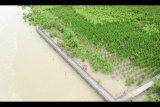 Kelestarian mangrove penting buat tingkatkan kinerja  perekonomian desa