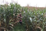 Pakar Unsoed: Cegah penyakit tanaman dengan bibit unggul