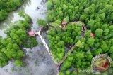 Kementerian LHK programkan tanam 5.000 bibit mangrove di Papua